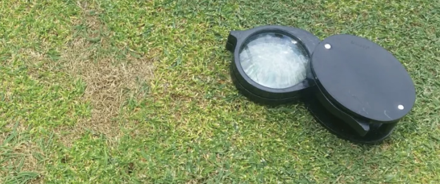 Turf Care South Africa Anthracnose