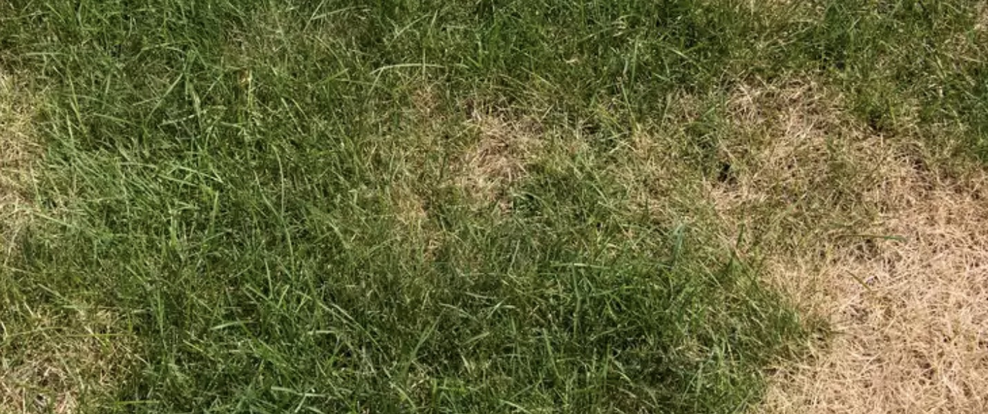 Turf Care South Africa Brown Patch