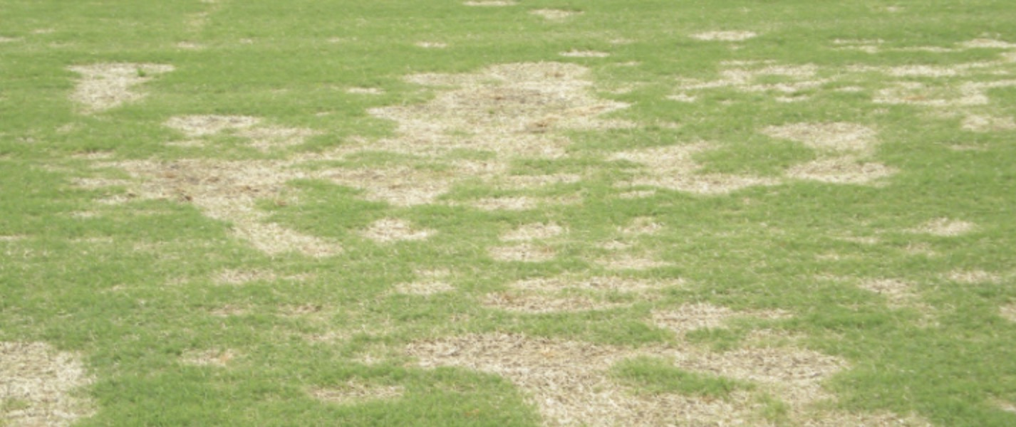 South Africa Golf Turf Care Treating Spring Dead Spot