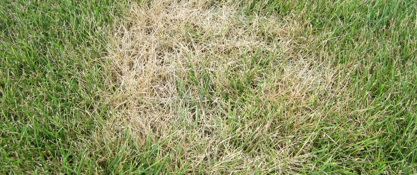 South Africa Golf Turf Care Treating Summer Patch