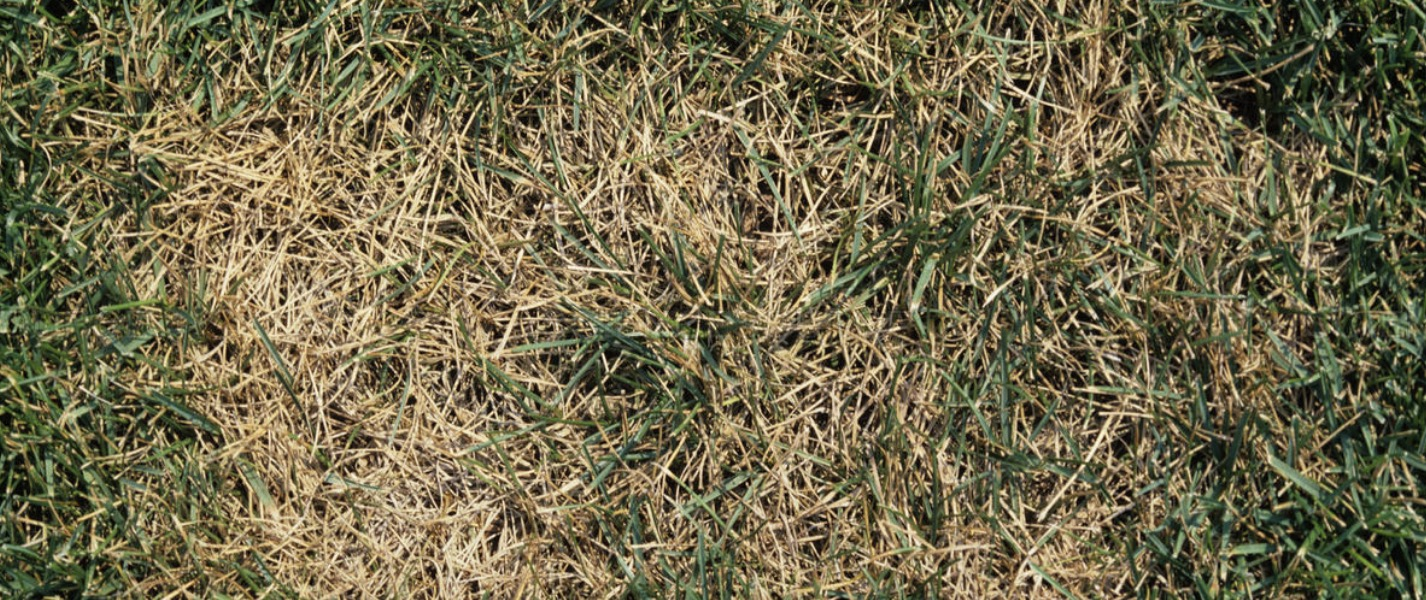 South Africa Golf Turf Care Treating Summer Patch 2