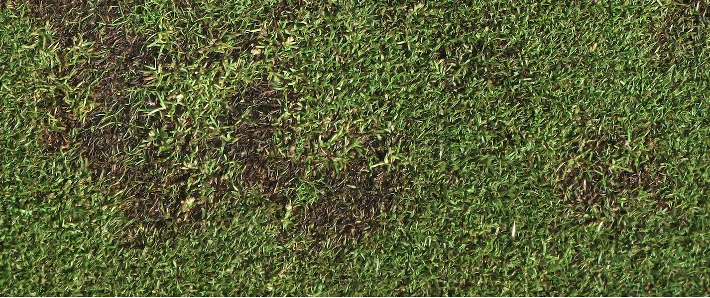 South Africa Golf Turf Care Treating Take All Patch