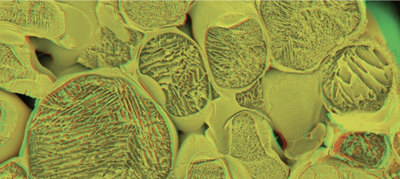 ~1400 Primo Maxx particles can fit across each stomata.
