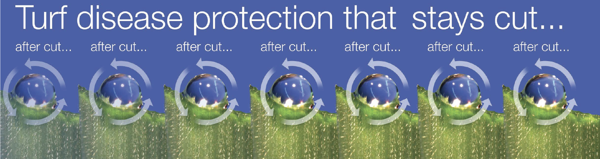 Turf disease protection that stays cut..