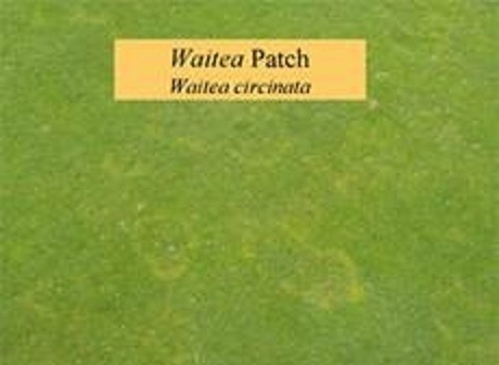 Waitea Patch