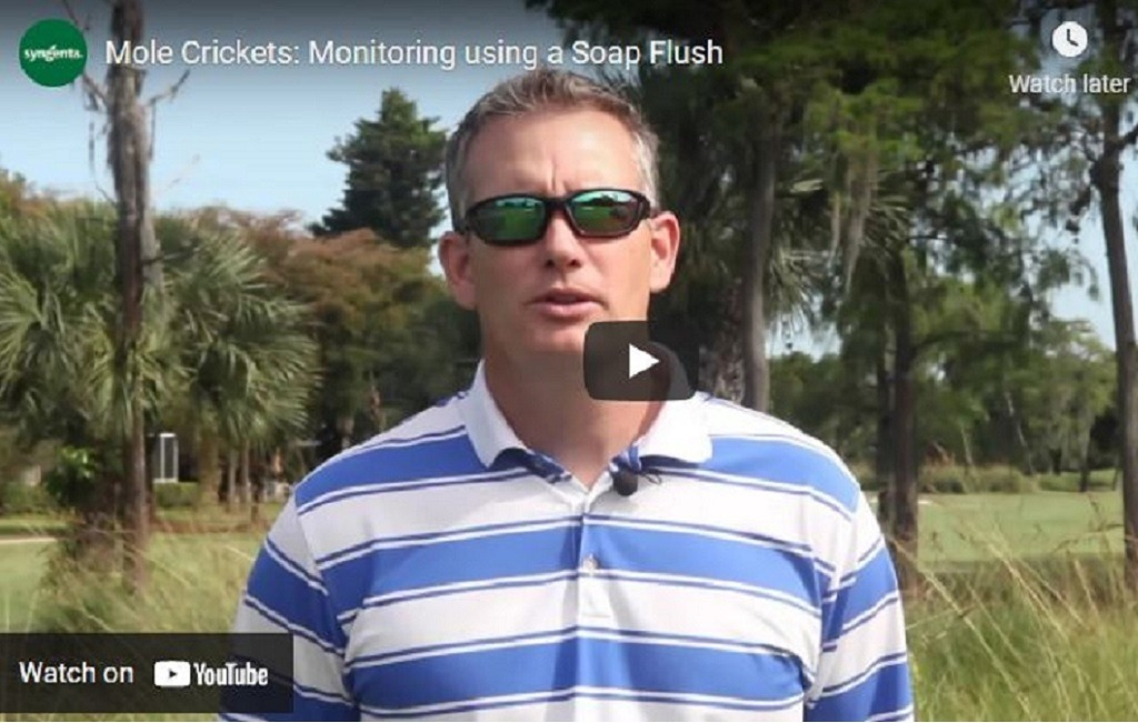 Stay in control of mole crickets main